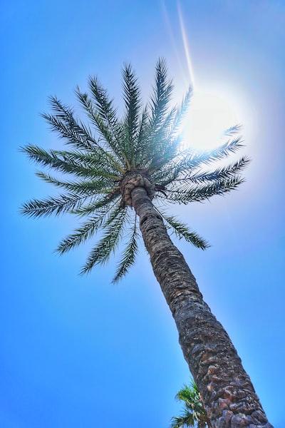 palm tree under sunlight