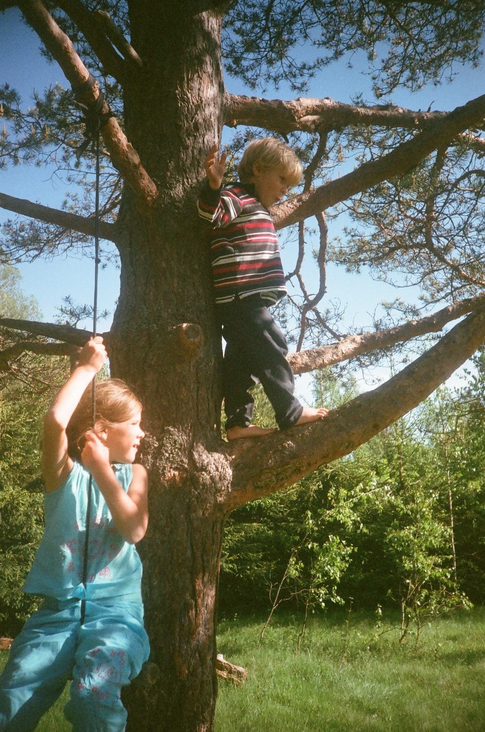boy standing on tree branch during daytime