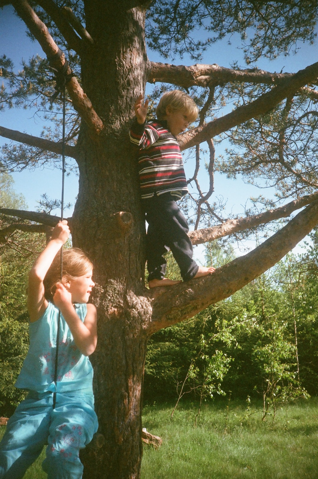 Kids spending summer on a pine tree