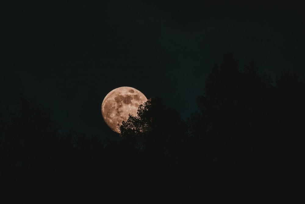 silhouette of trees under full moon