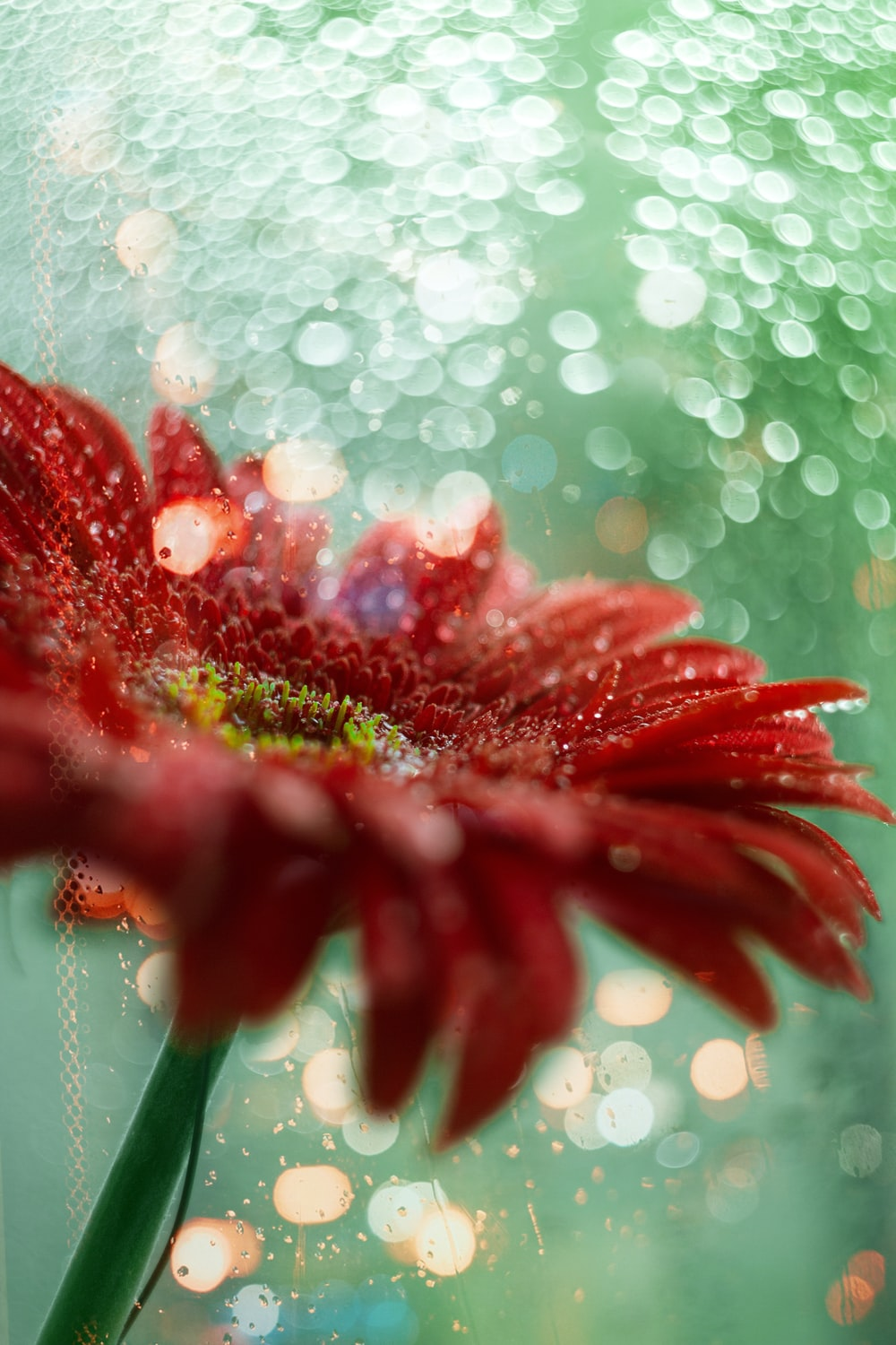 red-petaled flowers with water droplets