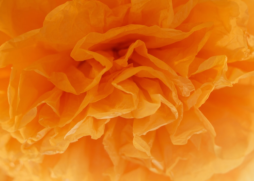 macro photography of blooming orange petaled flower