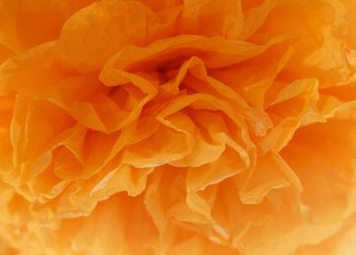 macro photography of blooming orange petaled flower