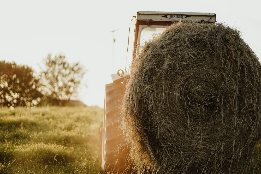 hay roll on grass
