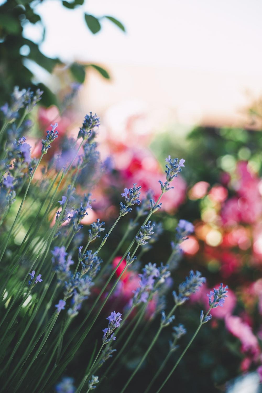 purple flowering green outdoor plant