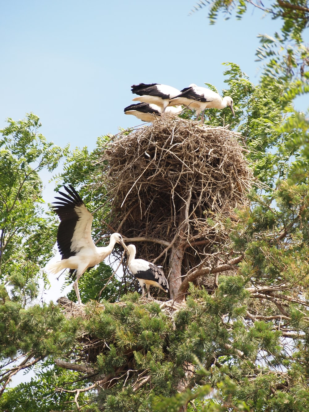birds on tree branch and nest on tree