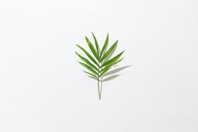 Minimal Leaf with Hard Shadow