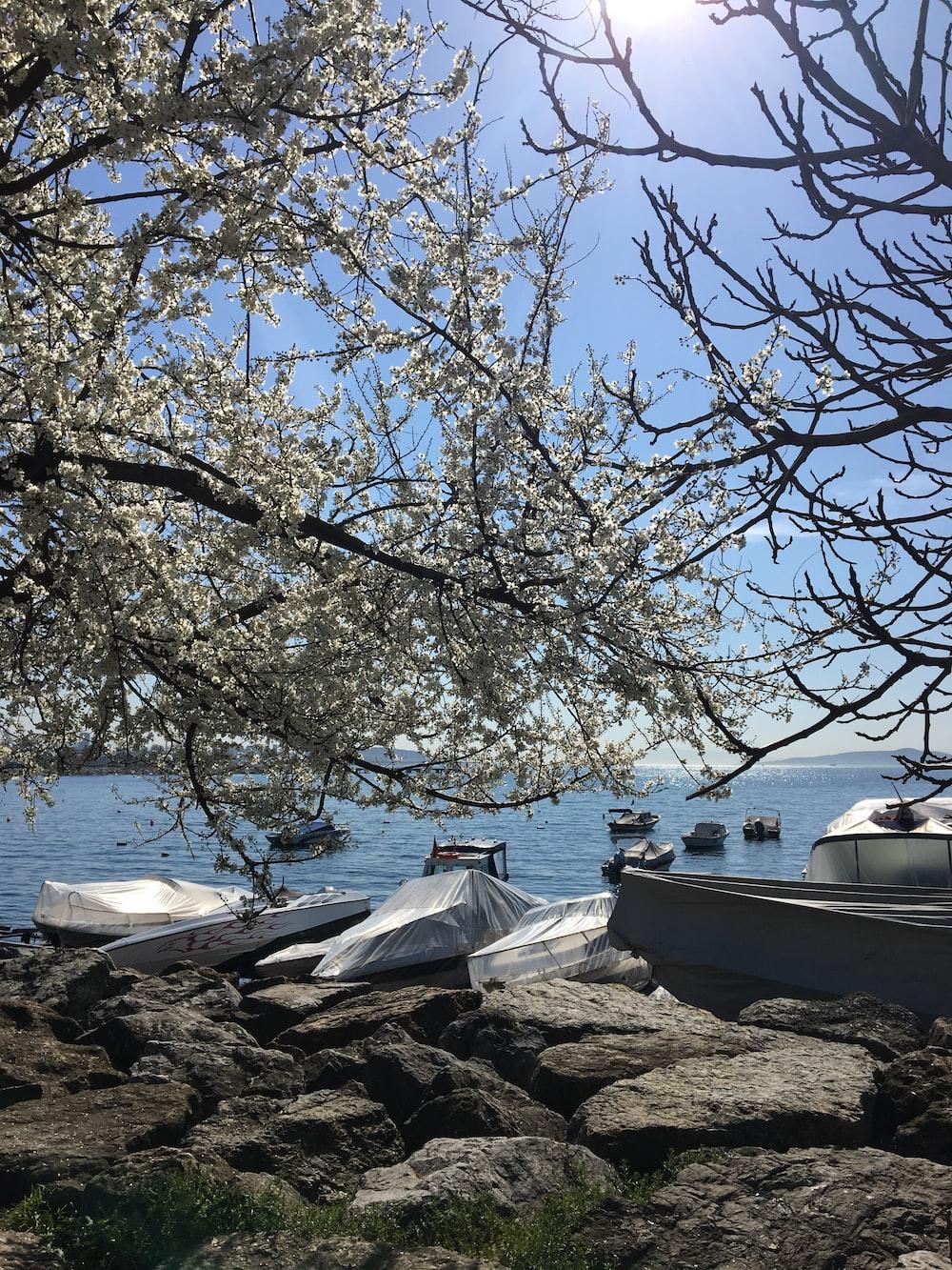 tree near boats on shore
