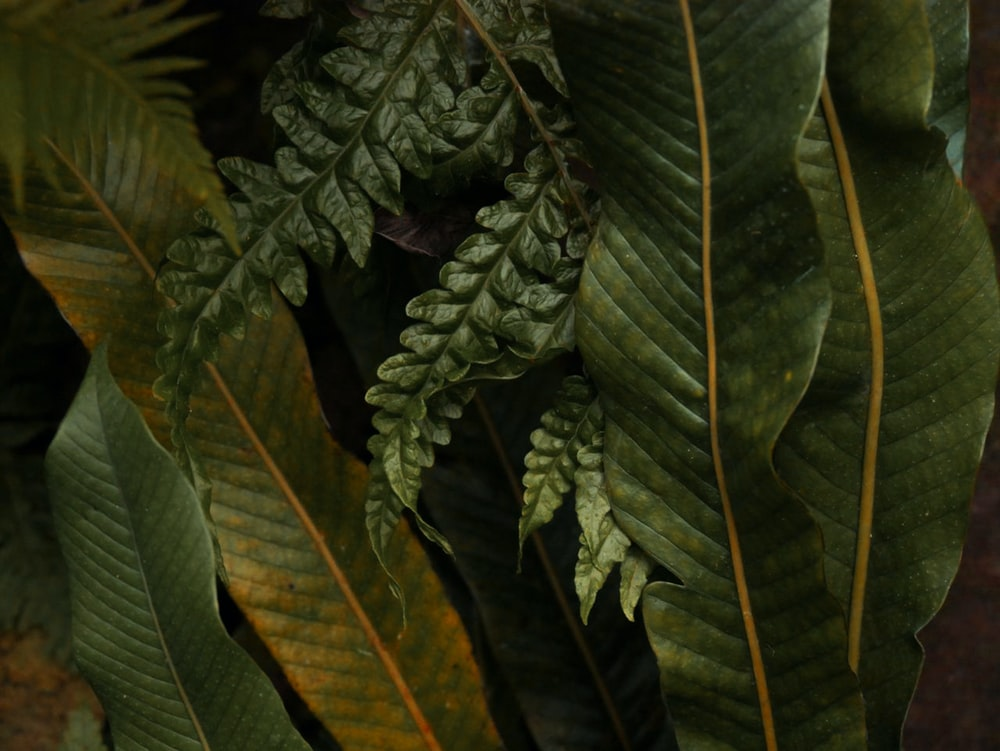 close-up photography of green-leafed plants