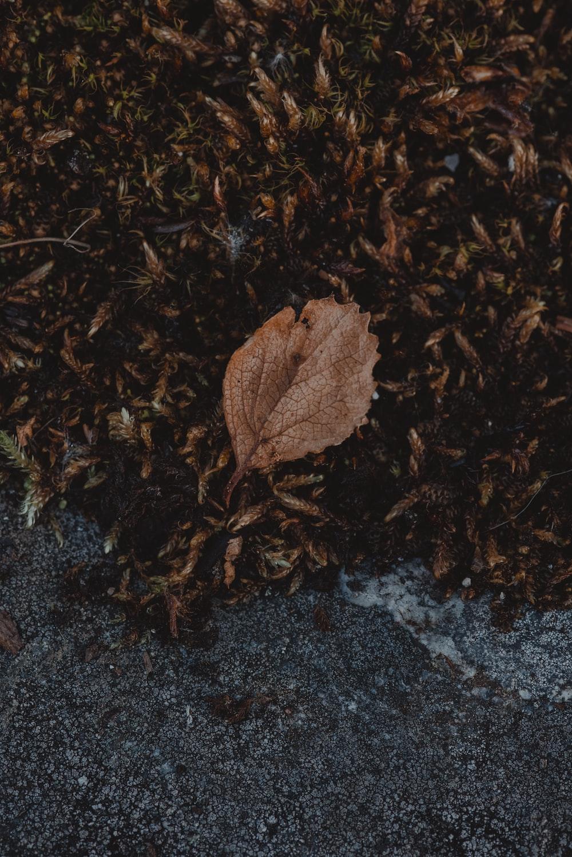 beige leaf