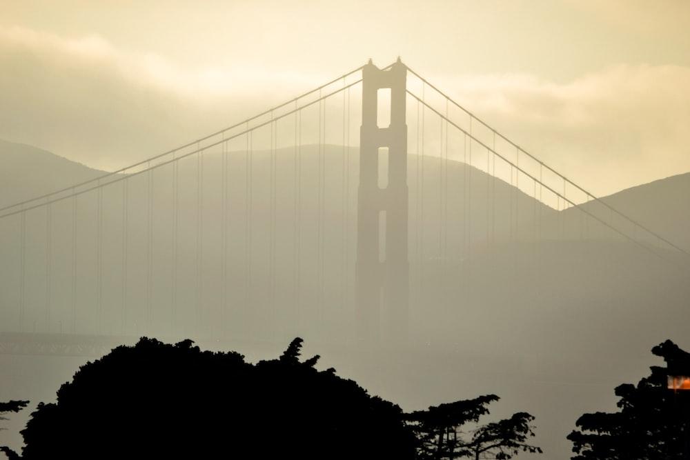 bridge on focus photography