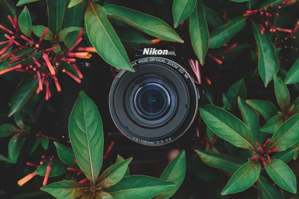 black Nikon camera behind green plants