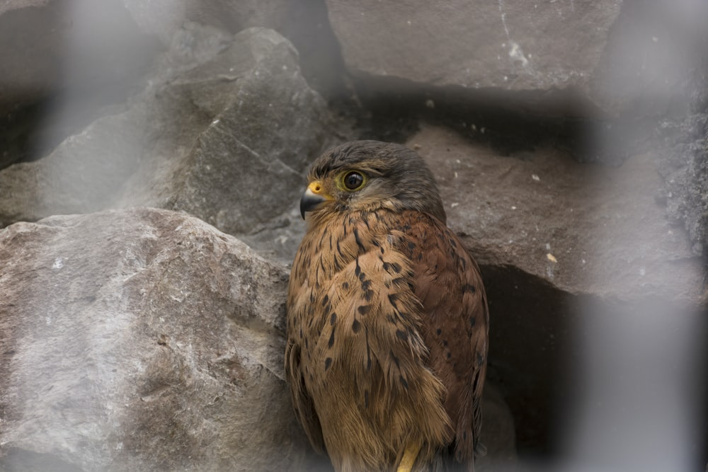 shallow focus photo of brown owl