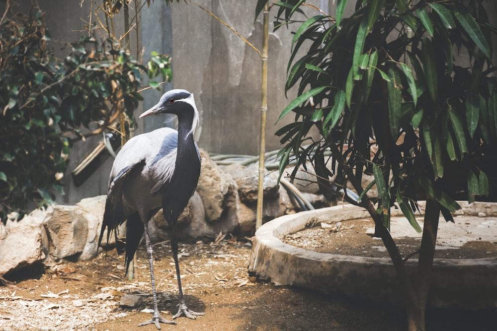 long-neck black bird near plant
