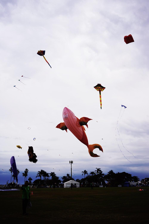 whale kite on air