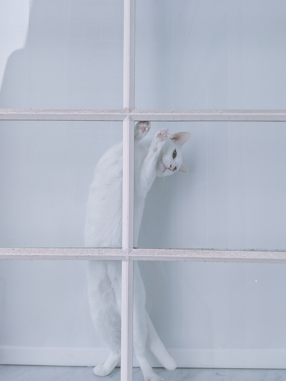 white cat standing beside white grille