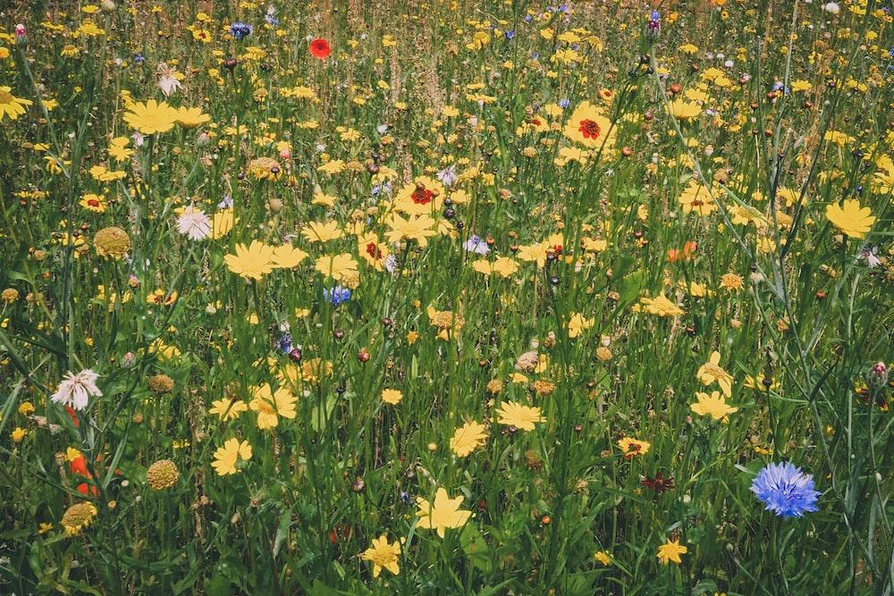 yellow-petaled flowers