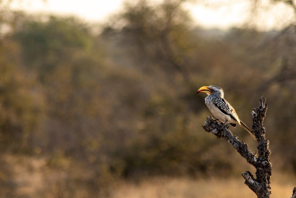grey bird on tree branch
