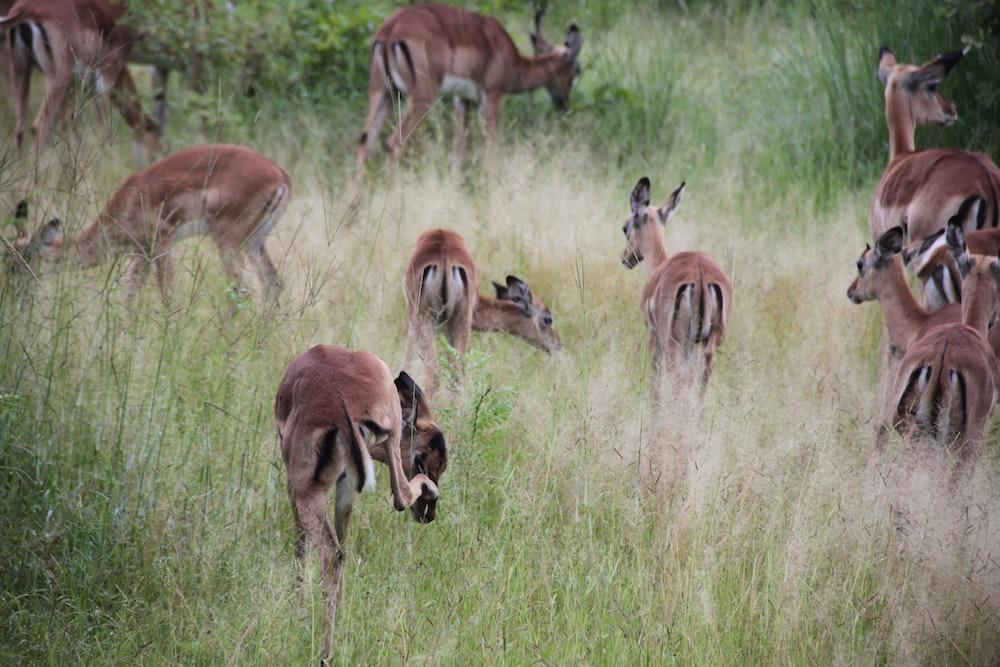 group of doe