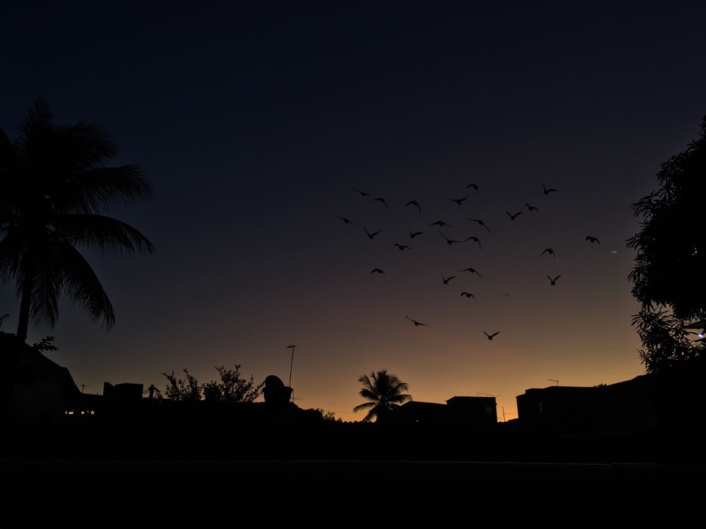 silhouette of birds during dusk