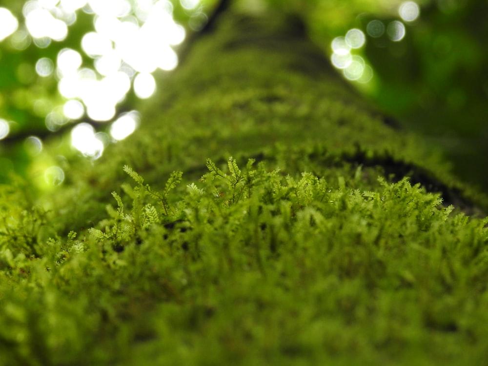 green grass macro photography