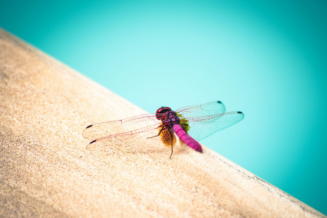 A dragonfly on the edge of a swimming pool, photo taken in Thailand, Krabi (January 2015).