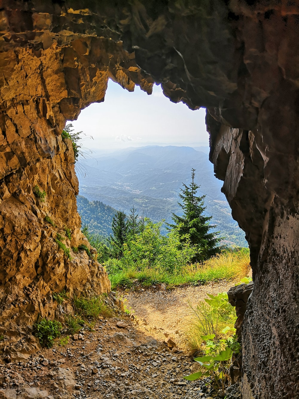 brown cave across green pine trees
