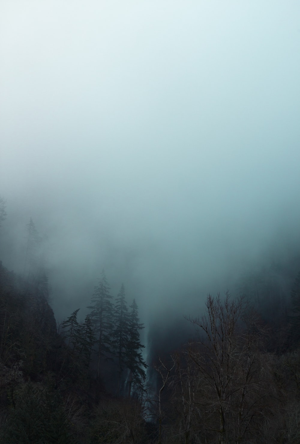 forest covered with fog