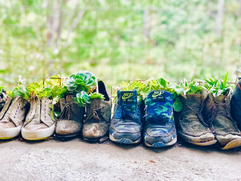 assorted-color plants on shoes
