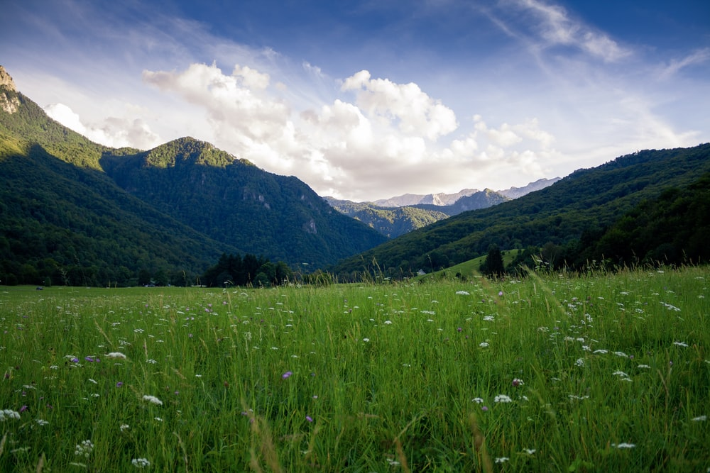 grass field and mountain ranges