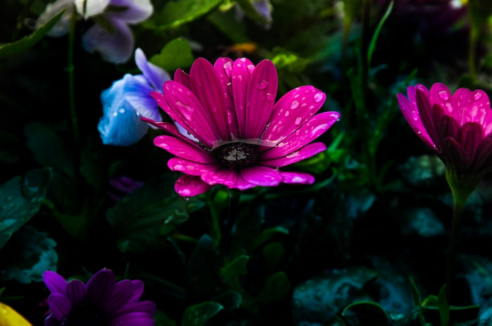 pink-petaled flowers in close-up photography
