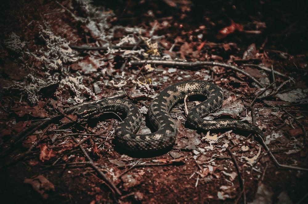 grey and black snake on ground