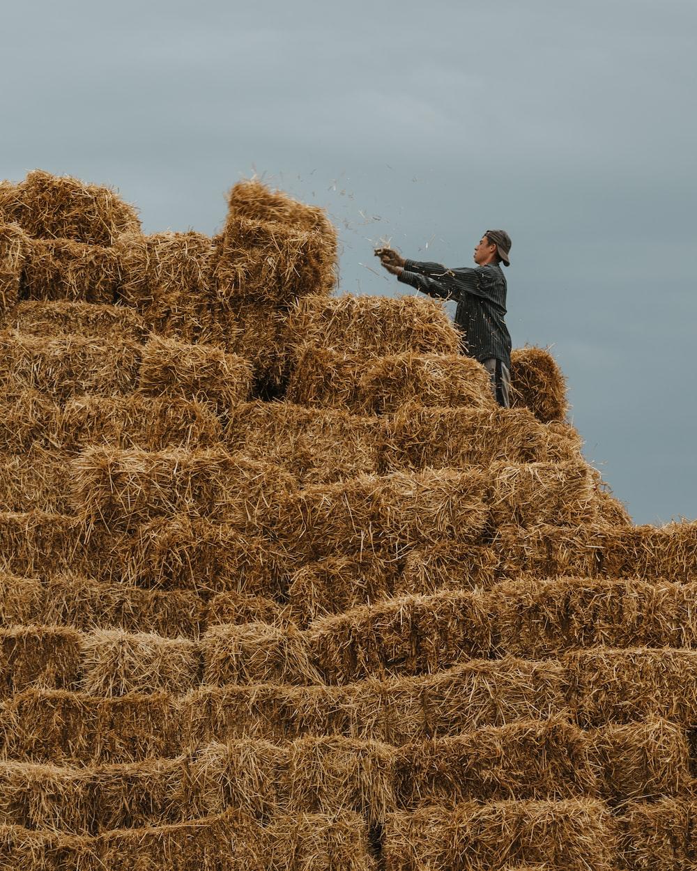 man in grey jacket on hay