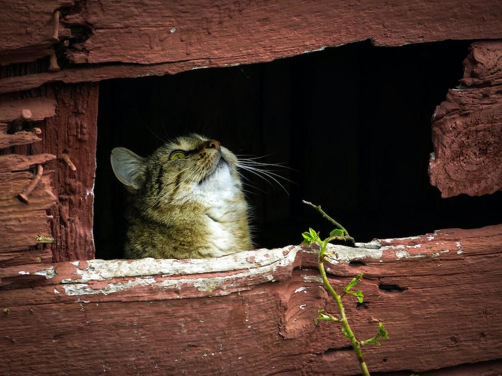 cat looking at wood
