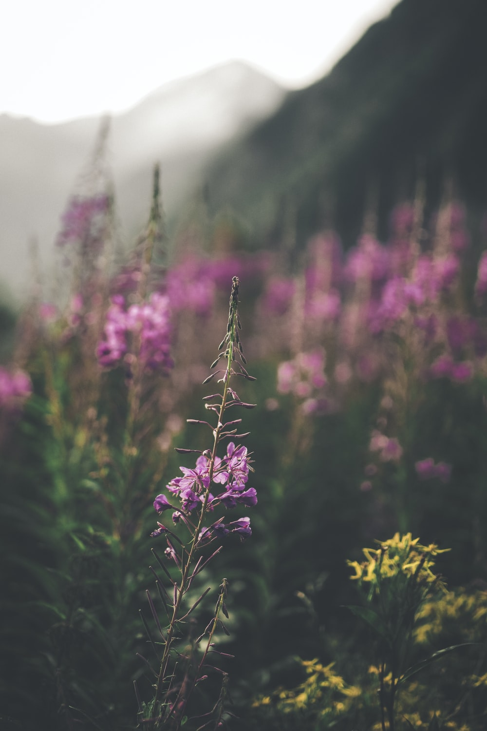 shallow focus photography of green plants with pink flowers