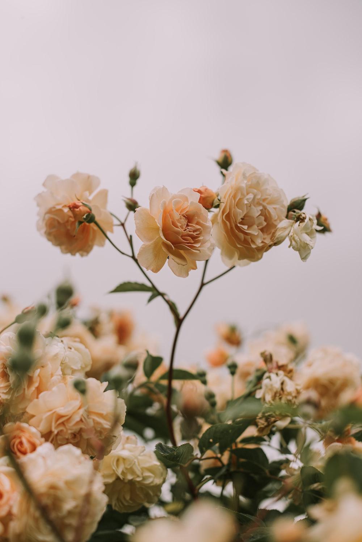 white flowers macro photography