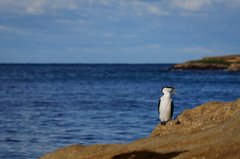 white bird near body of water during daytime