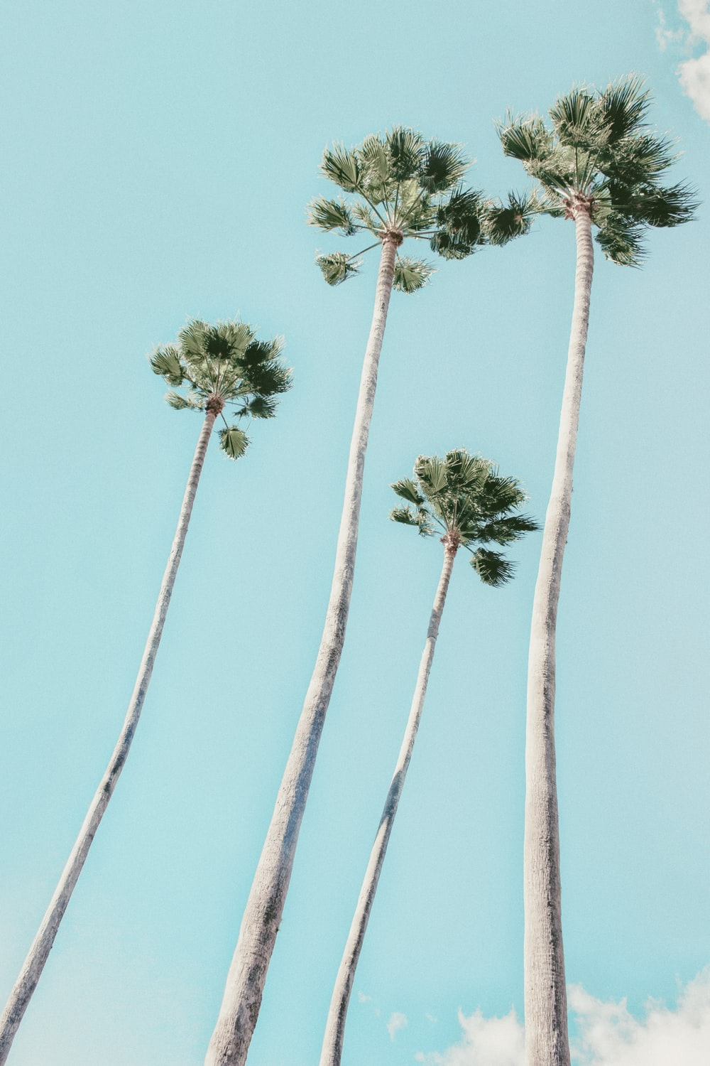 four green-leafed trees
