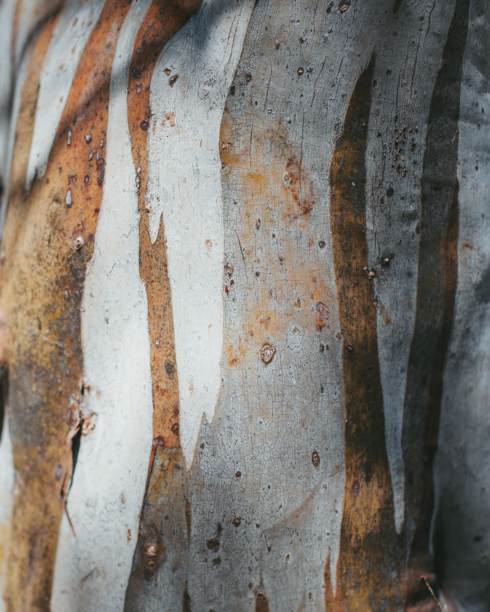brown and grey tree trunk