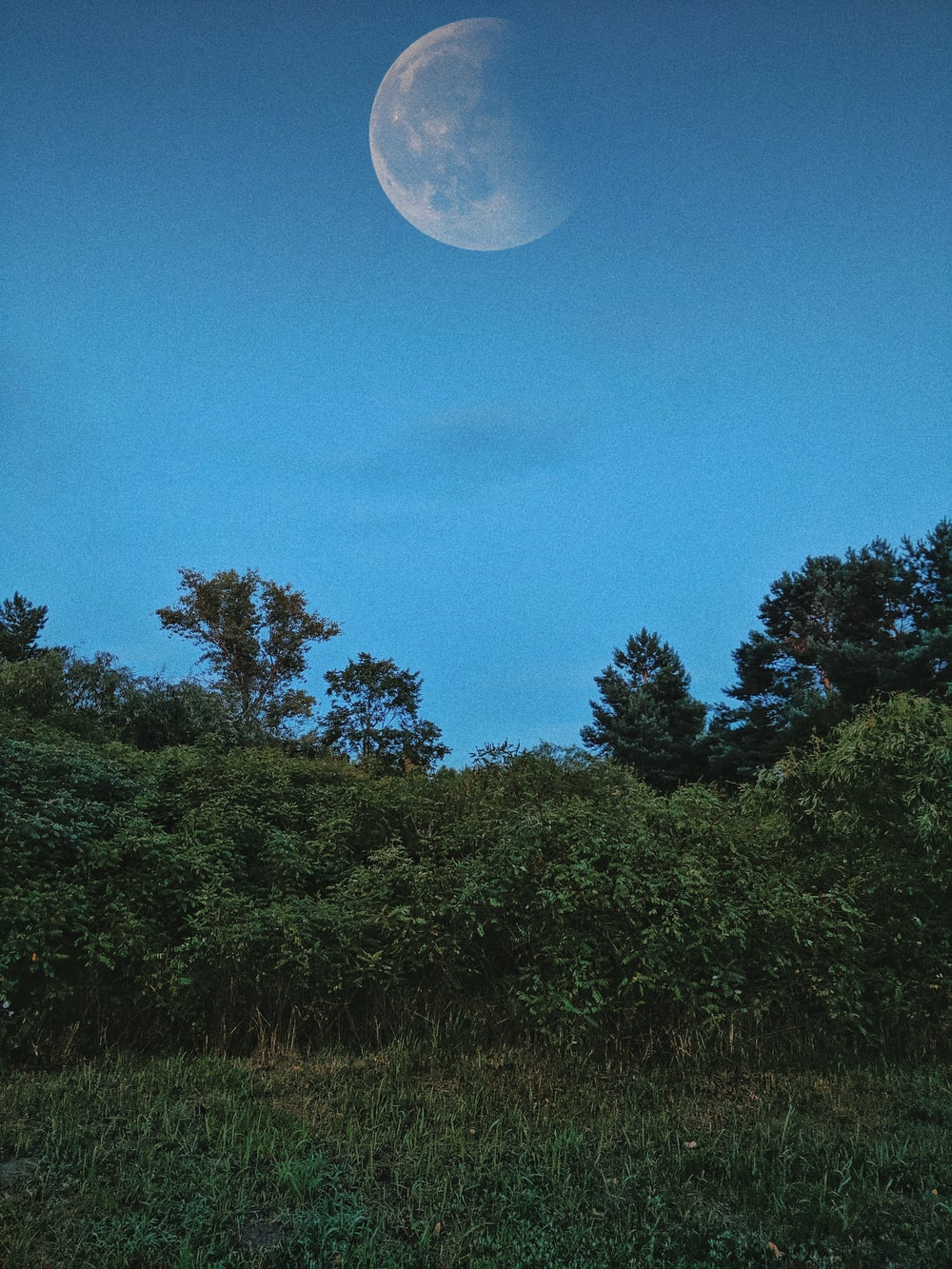green field surrounded with tall and green trees showing full moon
