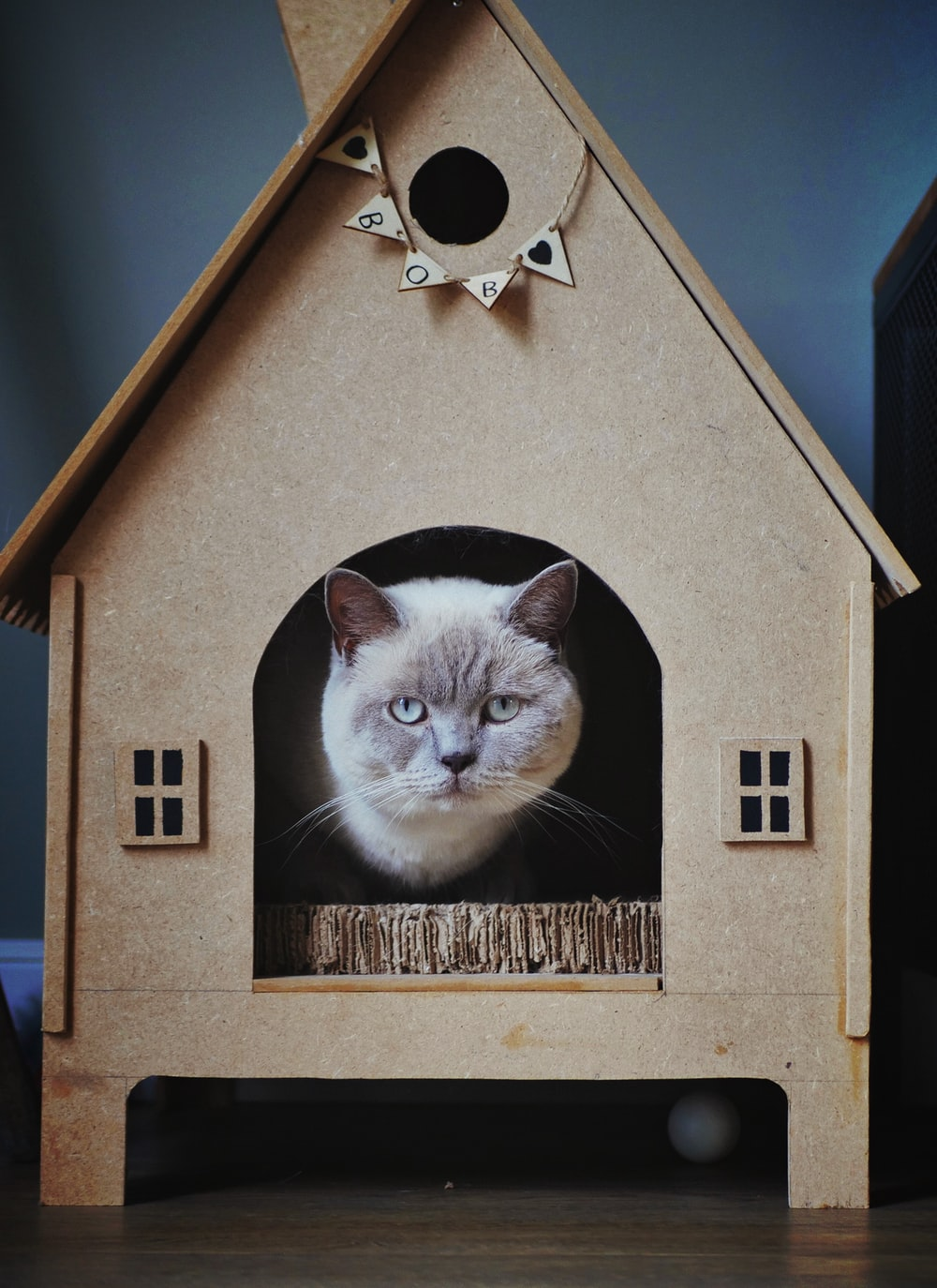 short-furred white cat on cat house