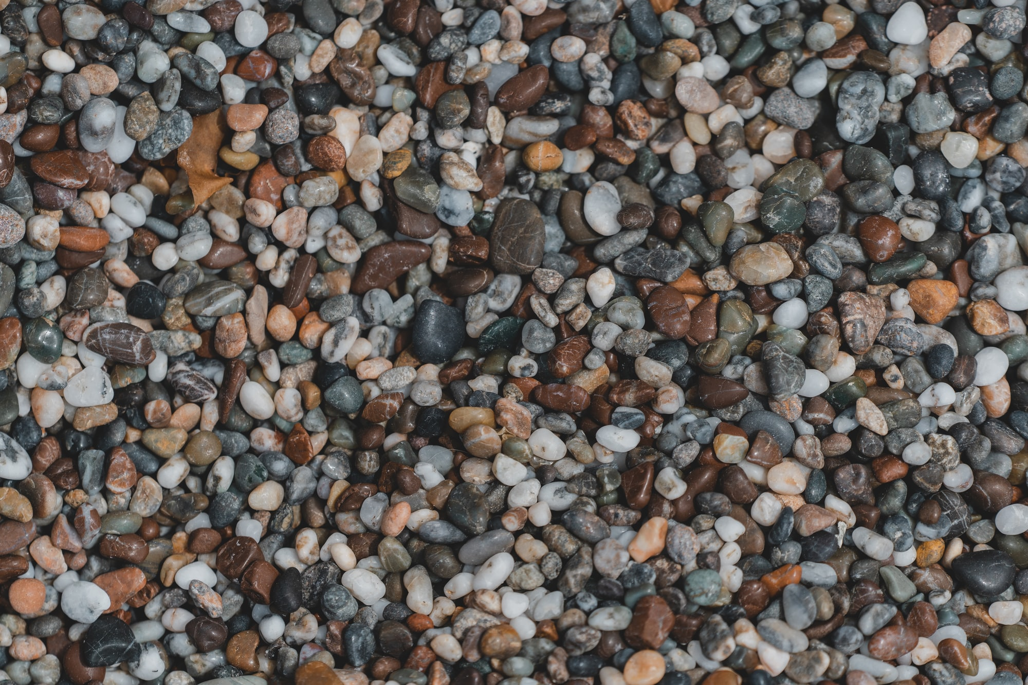 Details of a pebble beach. Such a wild experience to have tiny stones under your feet instead of sand between your toes.