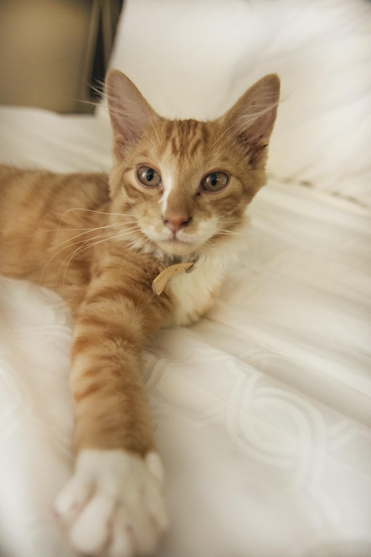 orange tabby cat on bed
