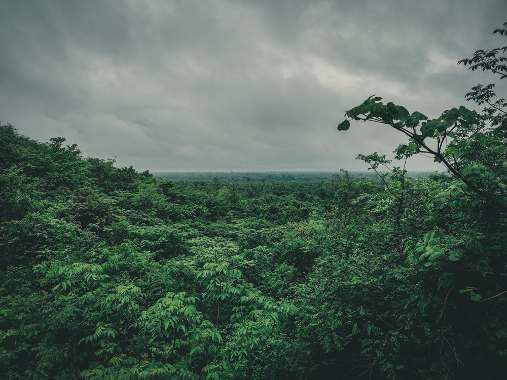 green-leafed forest under white clouds
