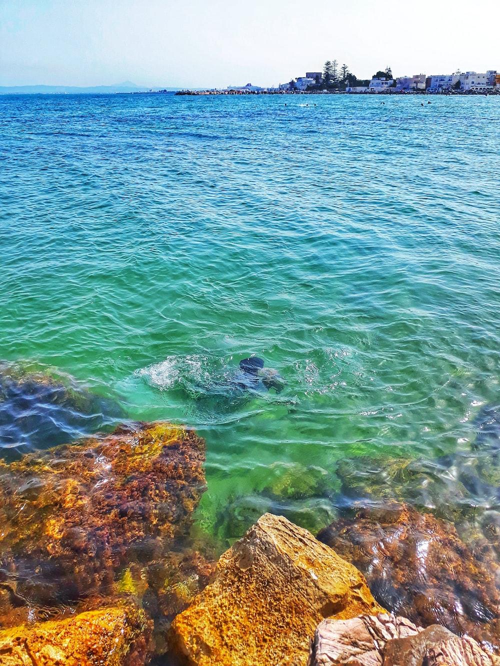 green sea during daytime