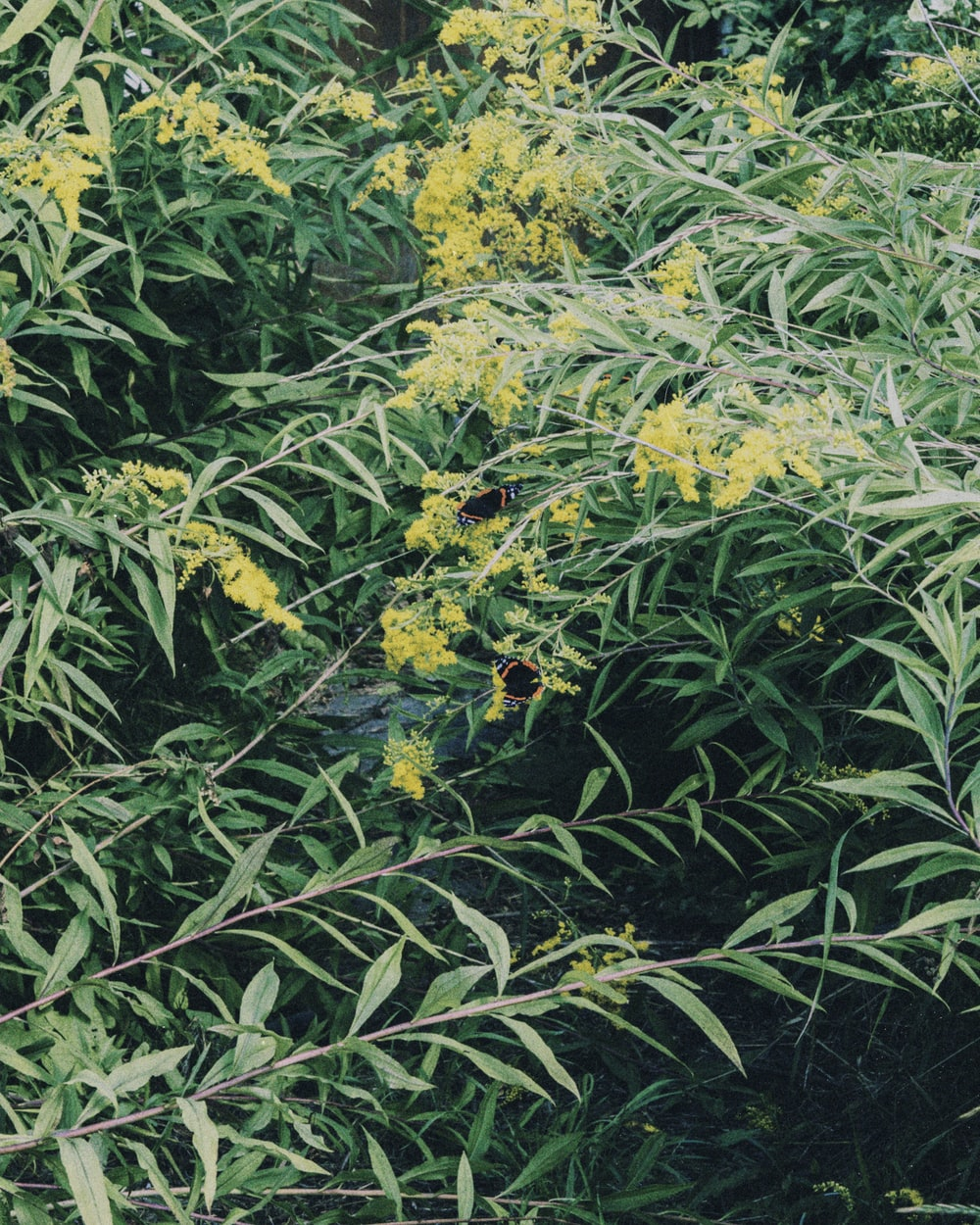 green and yellow plant with flowers