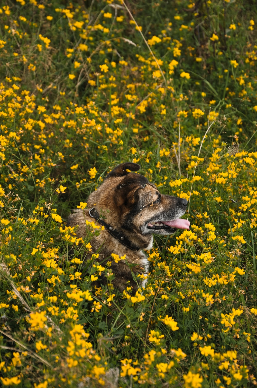 brown dog surrounded by flowers