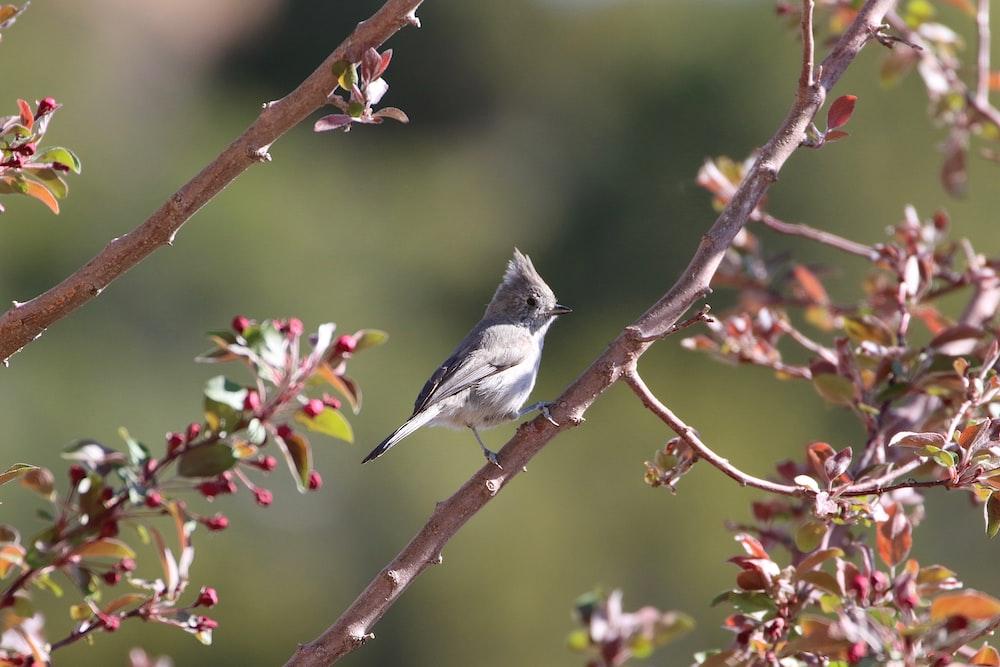 focus photography of gray bird