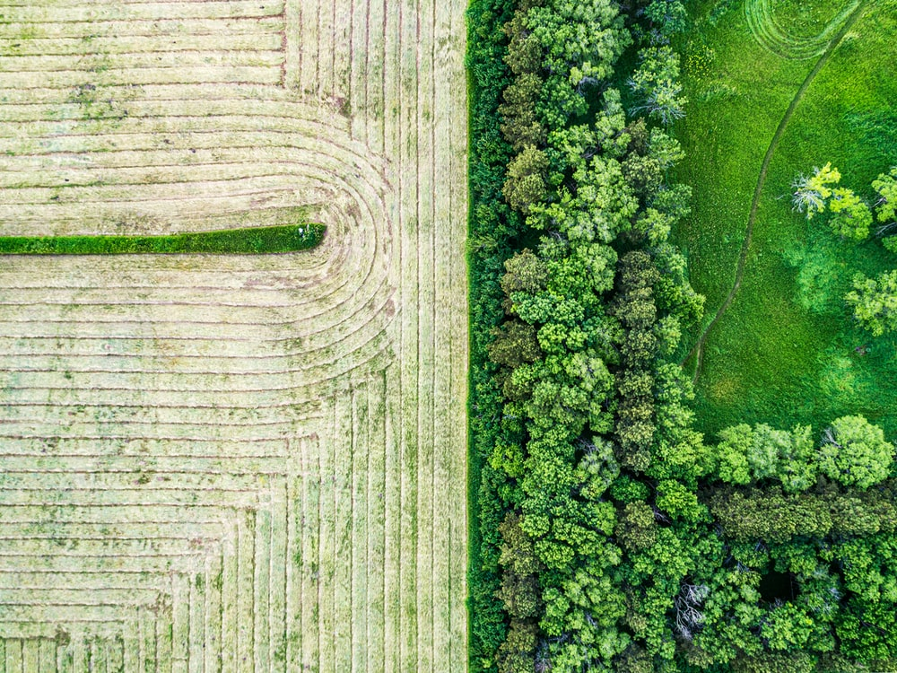 aerial view of trees near field
