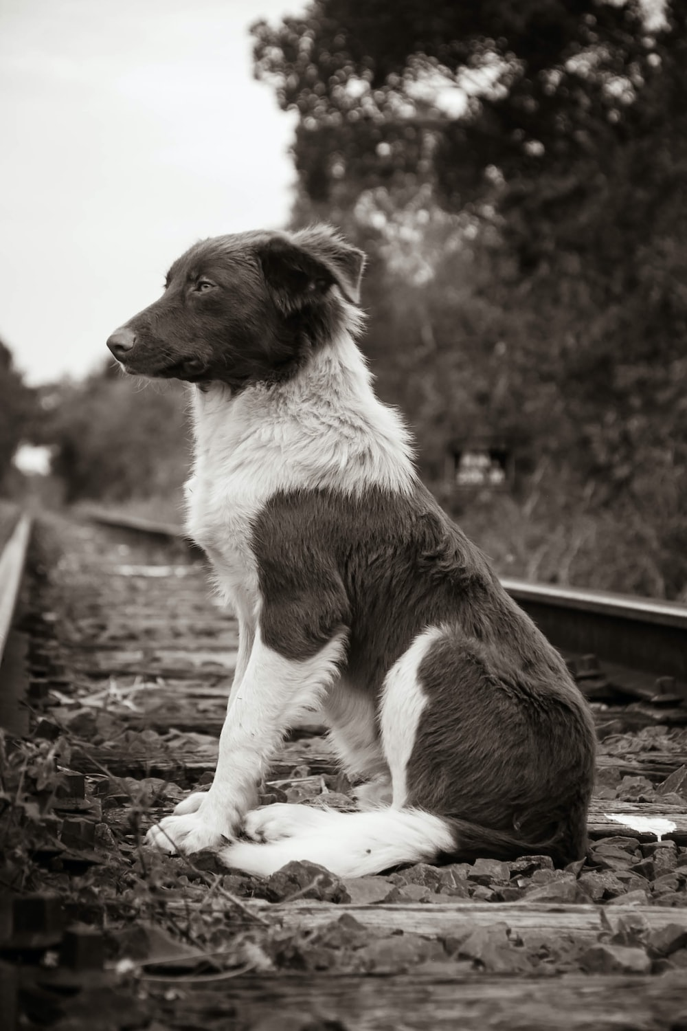 Why Train Dog - The Tricks of Teaching Your Dog to Walk on Leash